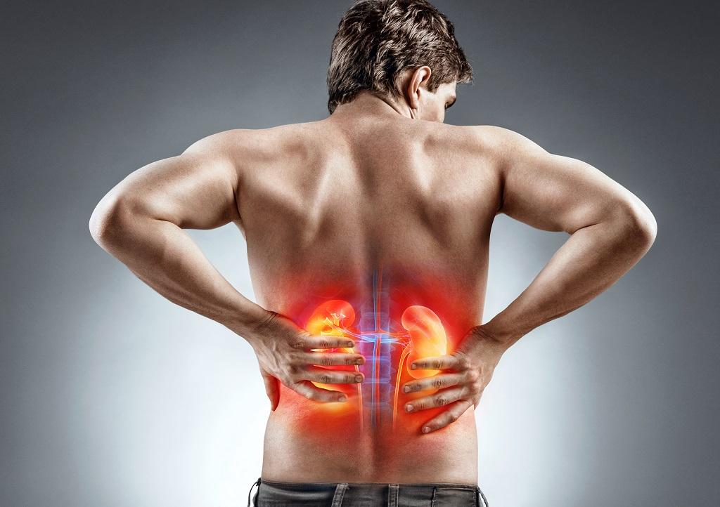 hvor sidder nyrerne i kroppen